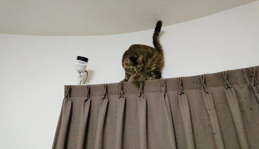 自宅猫見物カメラ導入記
